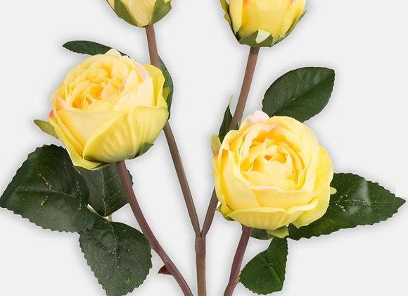 Rose 4 heads