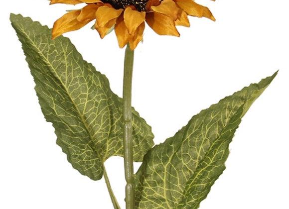 Large sunflower stem
