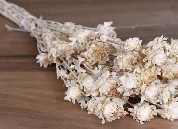 Dried carthamus bundle