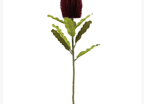 Large Banksia