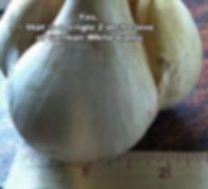 garlicclove2.jpg
