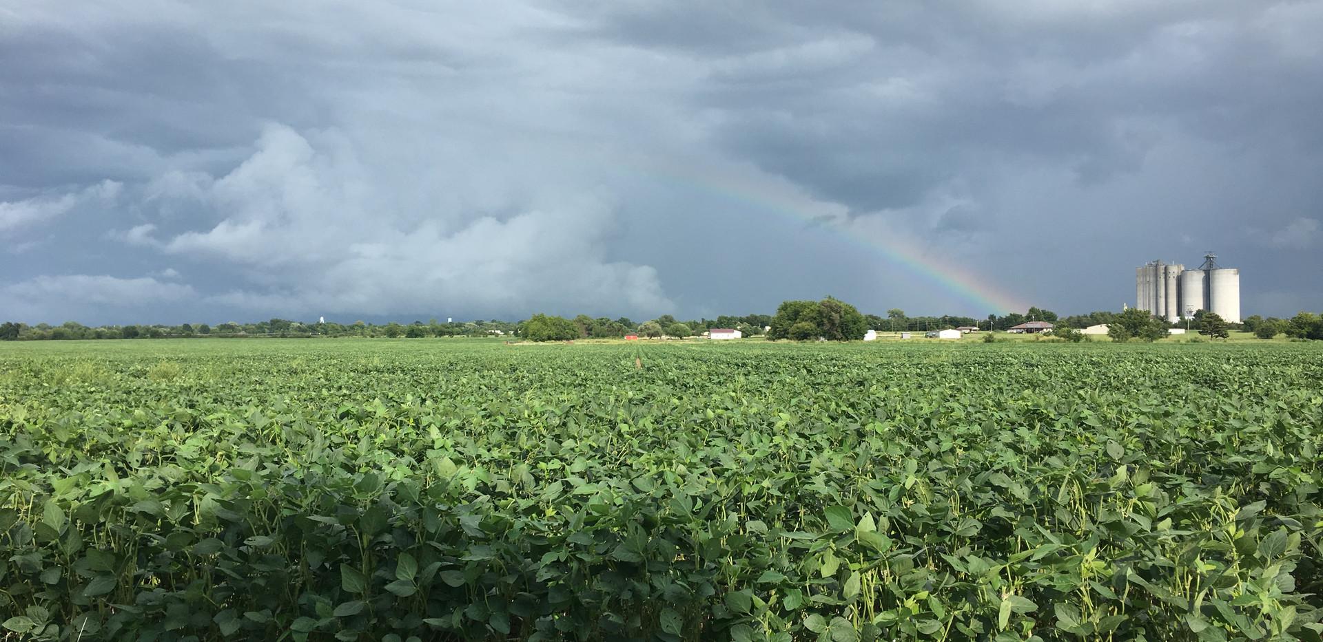Soybean Rainbow.JPG