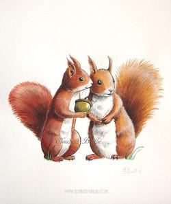 Couple écureuils