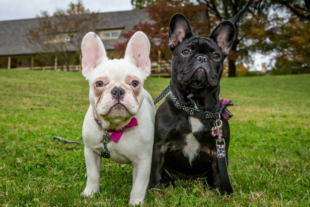 Luna & Coco
