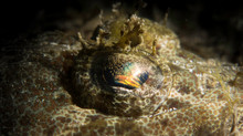 The colors in the Flathead eye