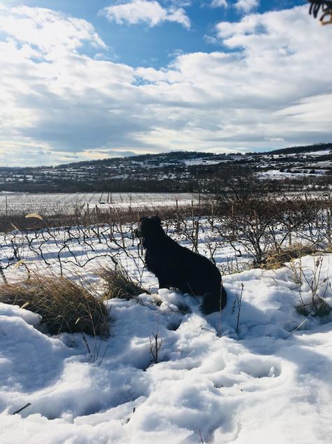 Ryba Winter