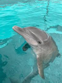 Dolphin Encounter 11.JPG