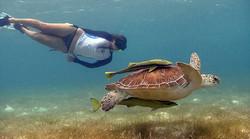 turtle-snorkeling-tour
