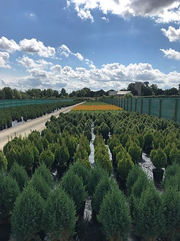 Conifer bed.JPG