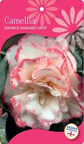 Camellia label.jpg