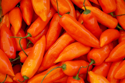 Yellow hot pepper,Aji Amarillo based for cooking peruvian food