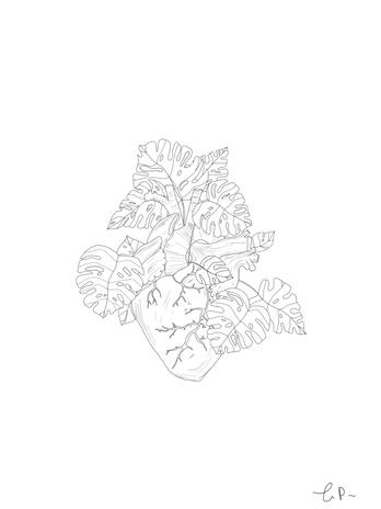 Monstera Anatomical Heart