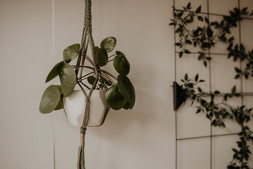 "Blumenampel ""Philodendron"""