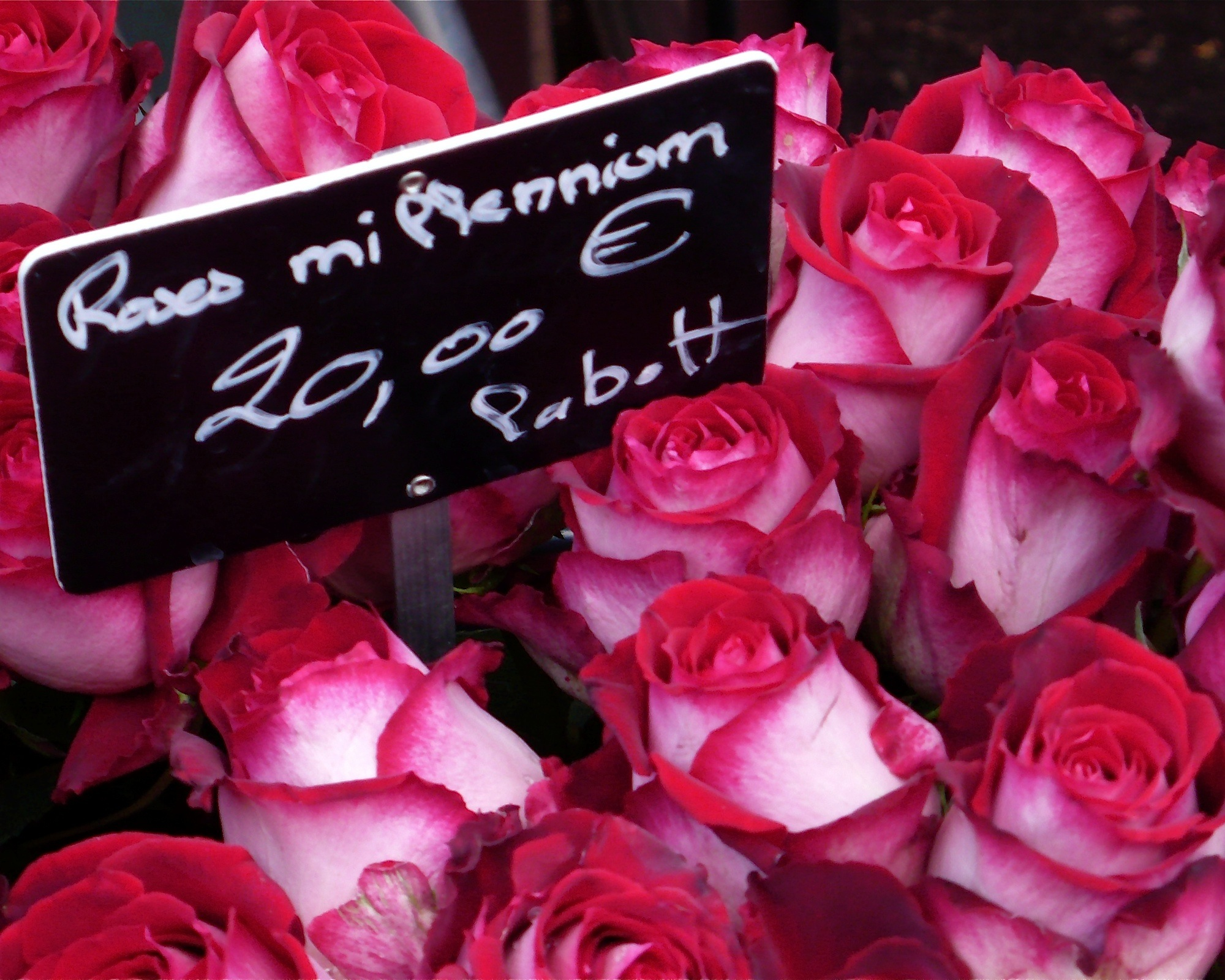 paris-roses-16x20-P1110426.jpg