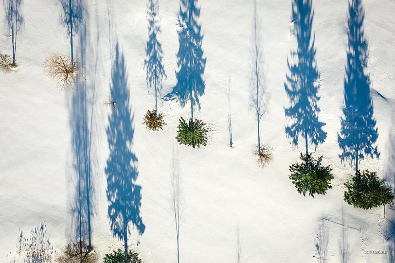 Ombres sur la neige.jpg
