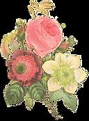 Ilustração da flor