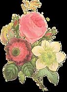 Flower Illustration
