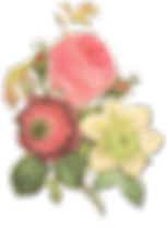 Illustratie van de bloem