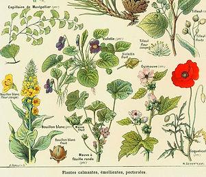 plantes medicinales.jpg