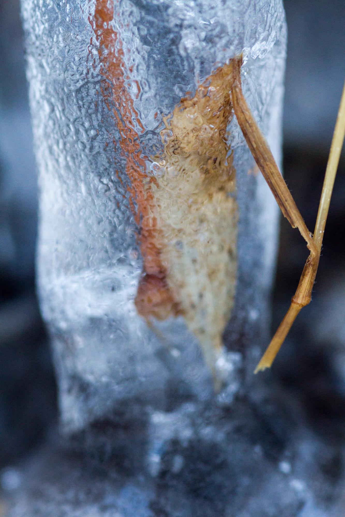 凍てつきの造形 Ⅰ