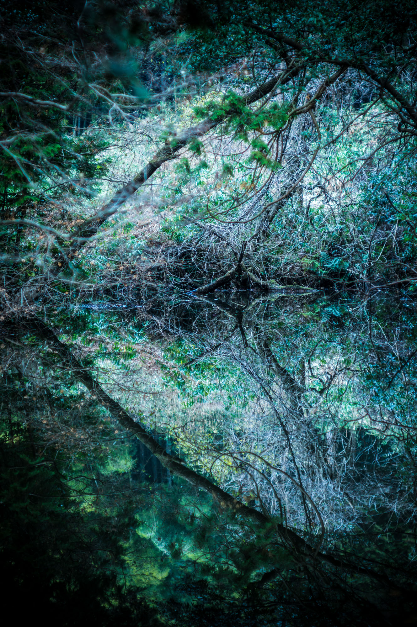 Reflection World