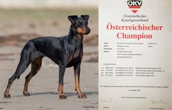 OesterreichischerChampion2019