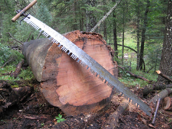crosscut in Mcknight Cabin - Photo credit Jeannie Cash
