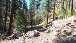 treadwork on the gallinas canyon trail i
