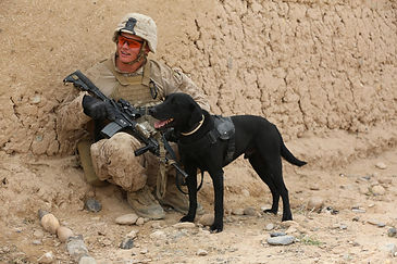Sniffer at work with his buddy/handler