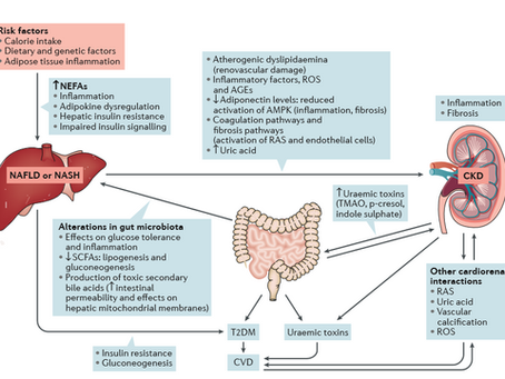 The Grey Areas in GI Health and Disease (2018)