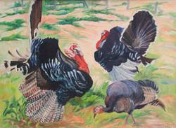 Turkeys by Ronald C Bell