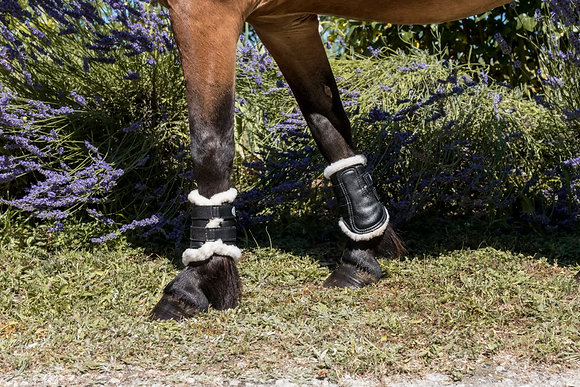Harry's Horse - Guêtres Flextrainer Tiny