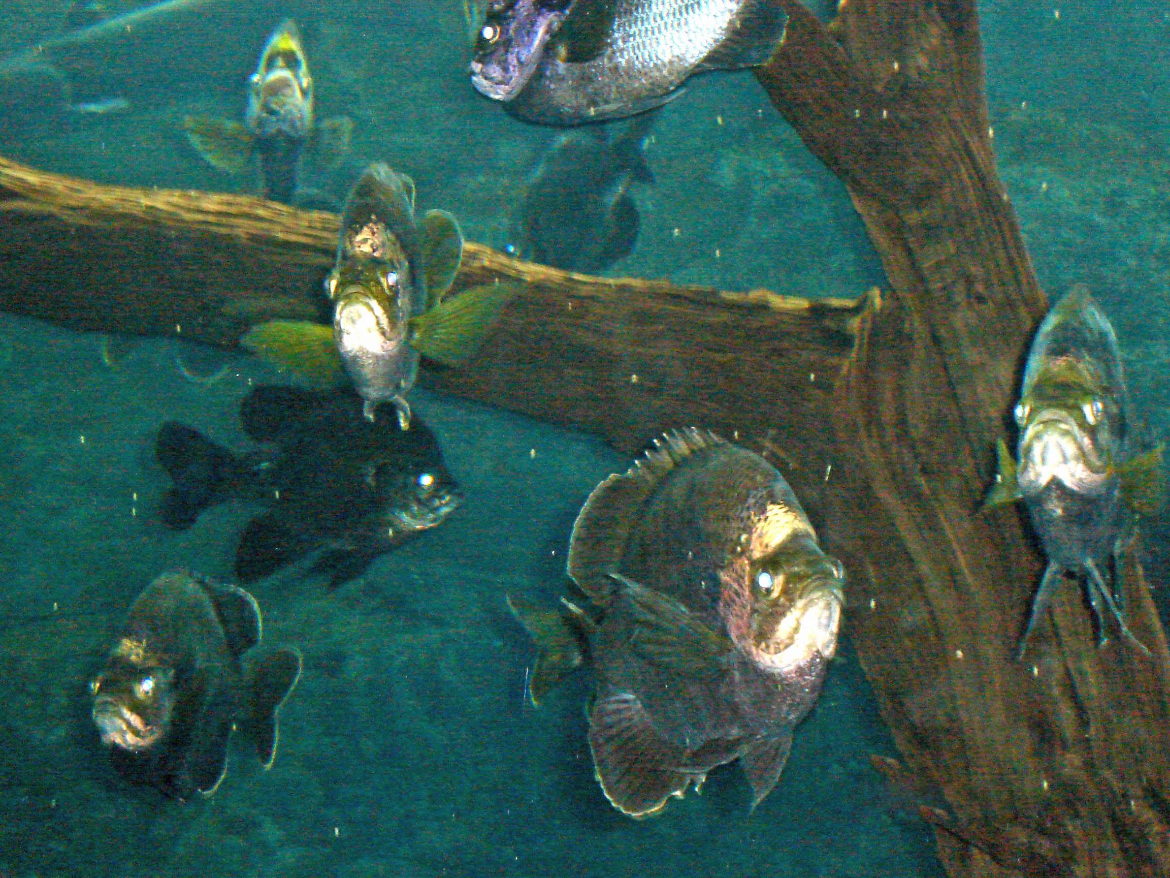 Tampa Bay Aquarium