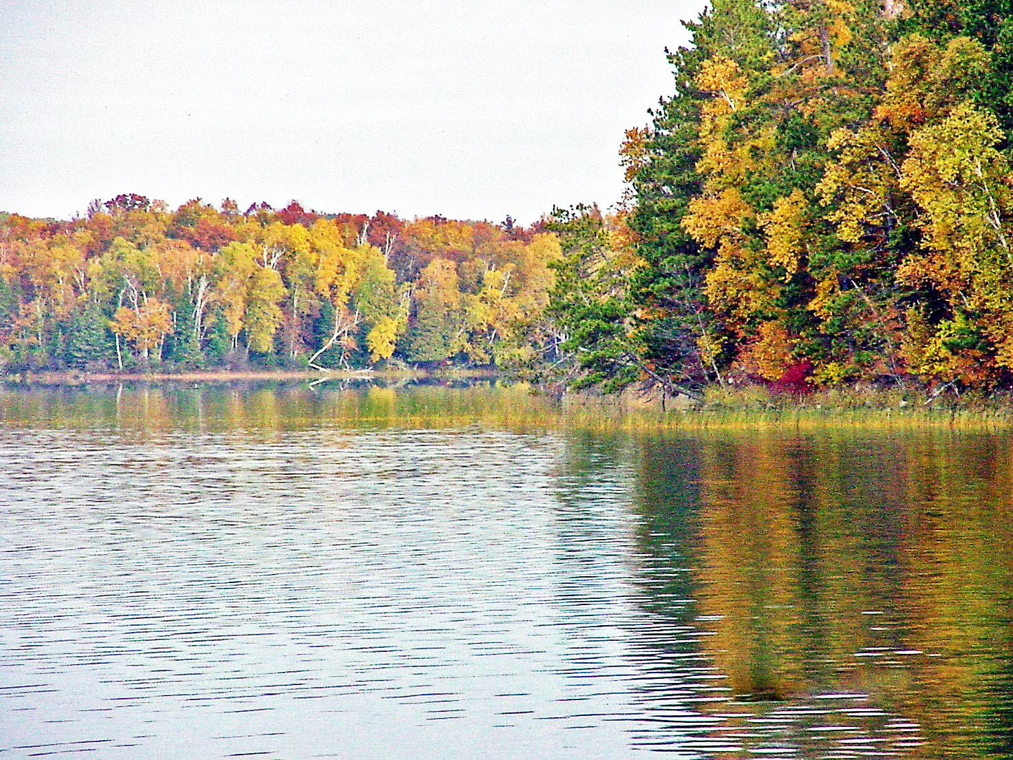 Fall Shoreline - Wabana Lake