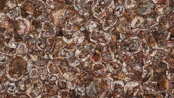 Petrified wood - gemstones or semi-precious stones - Pacific Granites India