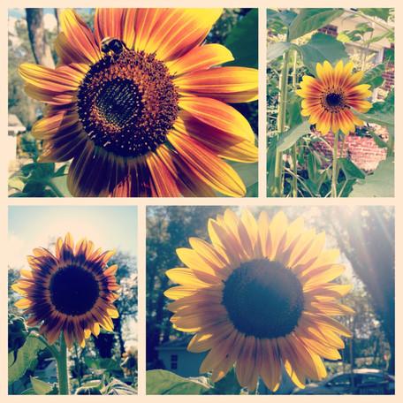 our happy garden