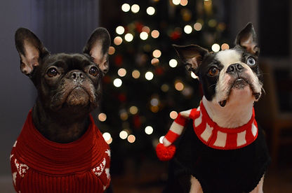 hattie-and-harvey-with-their-xmas-sweate