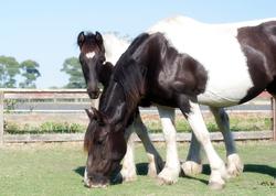 Part GC Foal 04