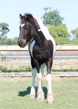 Part GC Foal 03