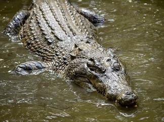 CAIRNS - Hartley's Crocodile Adventures & Palm Cove