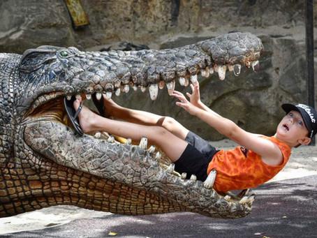 SUNSHINE COAST - Australia Zoo