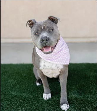 Hailey! Our loyal girl made out of FOREVER HOME material!