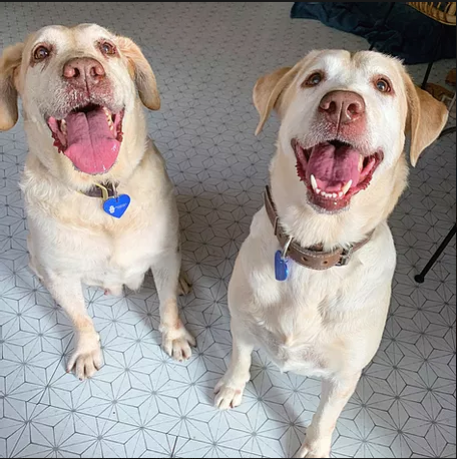 Molly + Mariposa - our bonded blondes!