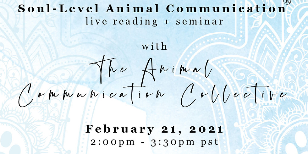 Soul-level Animal Communication seminar with The Animal Communication Collective