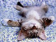 sleeping kitten.png