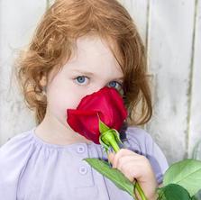 ACQUARIO   (Dal 21 Gennaio al 20 Febbraio)   » Elemento: ARIA   » Fiore: ROSA ROSSA