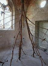 branche d'arbre sur le sol