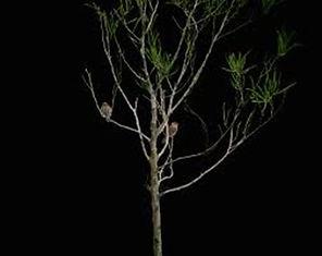 un arbre dénudé et des oiseaux sur les branches