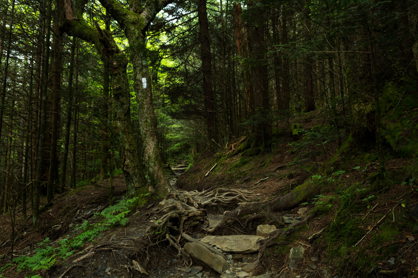 Appalachian Trail Out of Charlies Bunion
