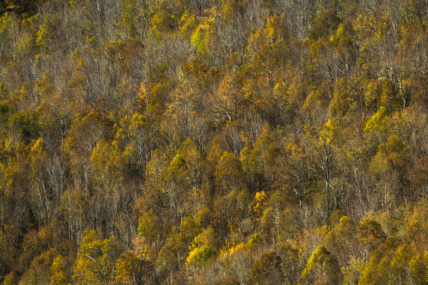 Autumn Along the Blue Ridge Mtns